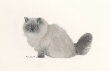 "A Pet Portrait – What is it like to Finish a Masterpiece of ""Mr. Madison Blue"""