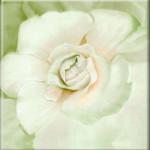 Enchanted Bloom Fine Art Giclee Green