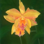 Spring is in the Air at L.A. CLINE Fine Art