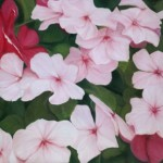 "Fine Art Reproduction of ""Wandering Impatiens"""
