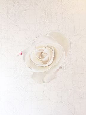 White Rose start of the new Pastel Painting