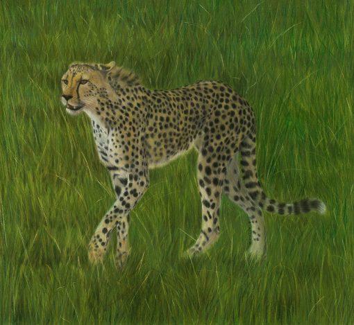 LAC Fine Art_Cheetah_R2new